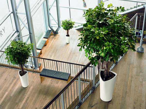 Modern Approaches To Indoor Plants